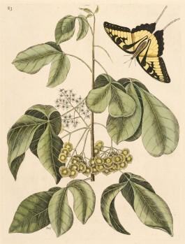 Natural  Beauties: Exploring the Botanical World